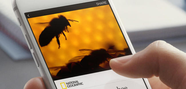 Facebook Instant Articles in Action