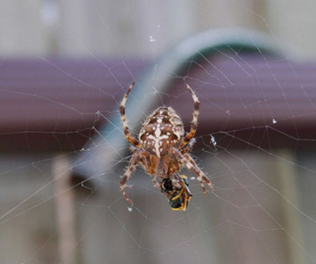 Spider Feeding