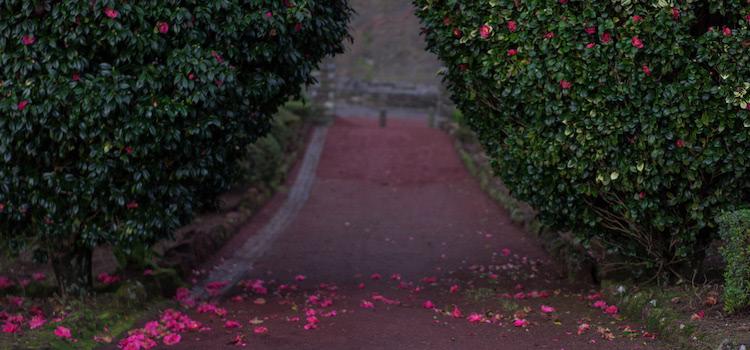 Petal Archway