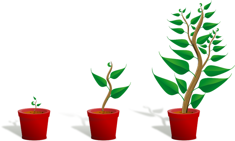 Pixabay - https://pixabay.com/en/sapling-plant-growing-seedling-154734/
